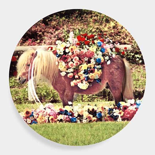 Maurizio Cattelan:プレート Ponyの商品画像