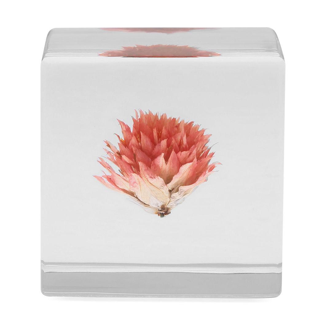 Sola cube センニチコウの商品画像