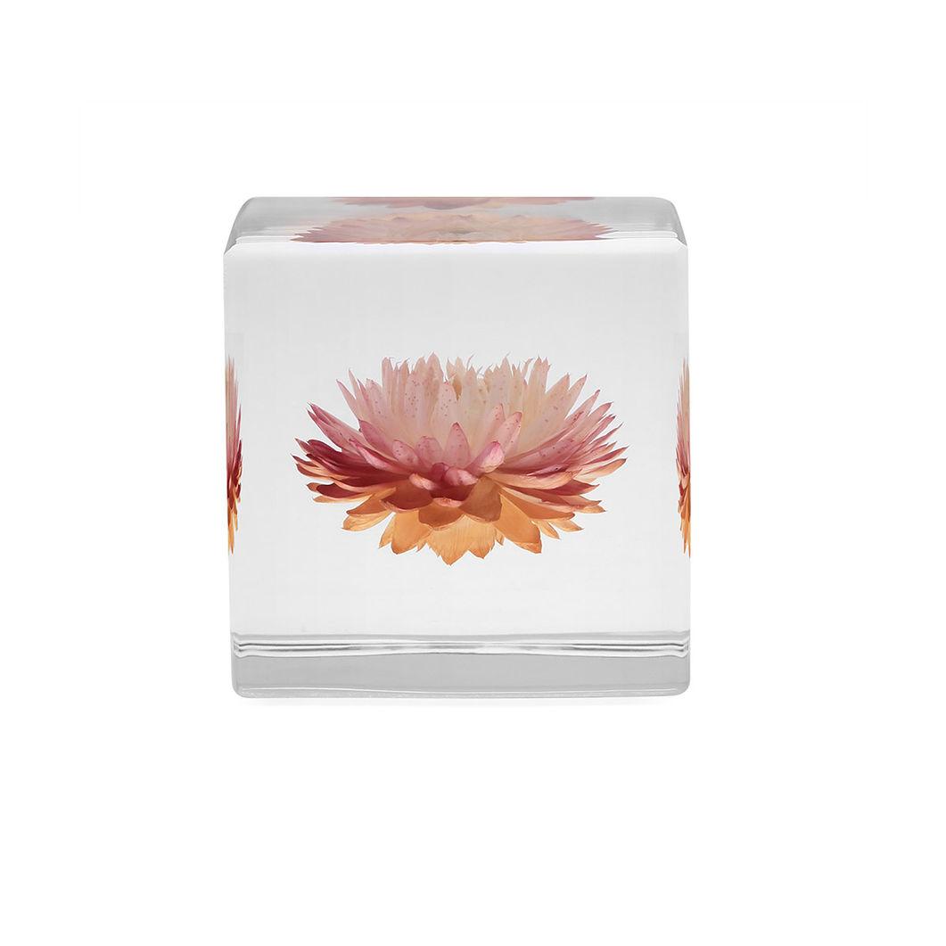 Sola cube カイガラソウの商品画像