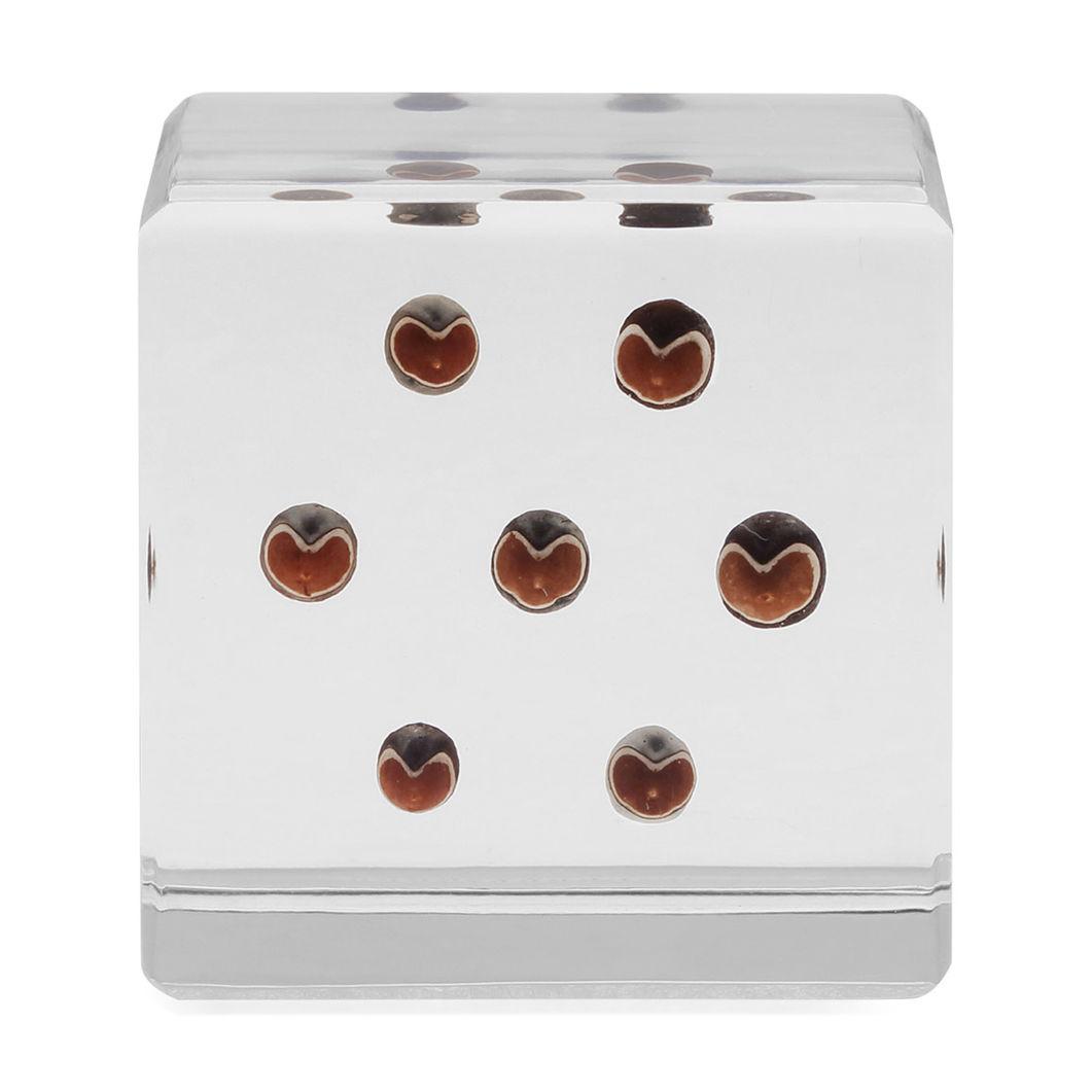 Sola cube フウセンカズラの商品画像